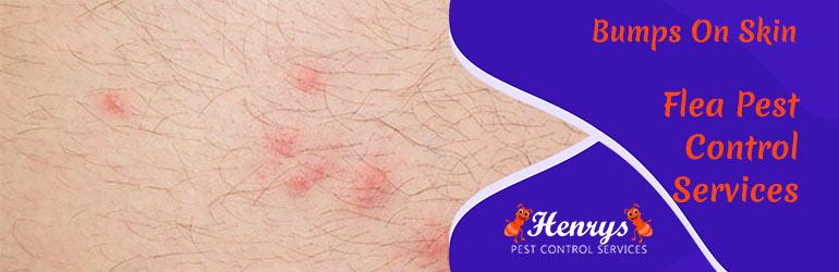 Expert Flea Pest Control Services