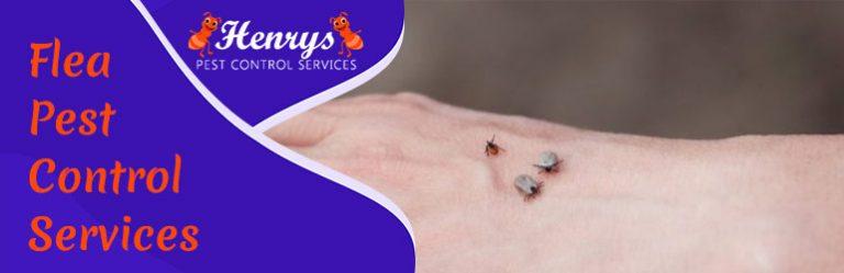 Flea Pest Control Services