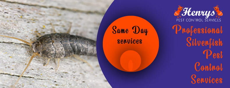 Professional Silverfish Control Services