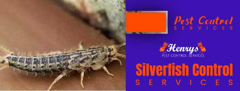 Silverfish Control Brisbane