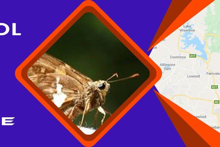Moth Control Brisbane