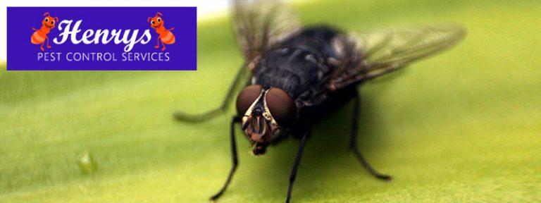 Get Rid Of Houseflies