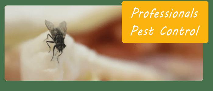 Professionals Pest Control