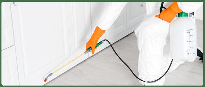 5 Ways To Prevent Pest Problems