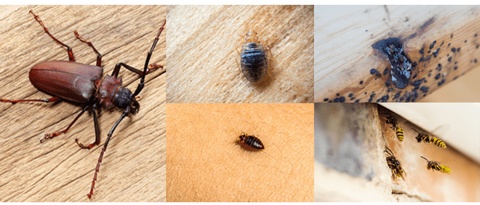 Protect Your Pets From Summer Pests