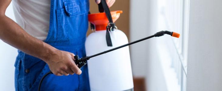 Expert Pest Control Carrara