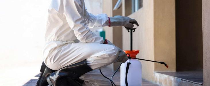 Pest Control Carrara