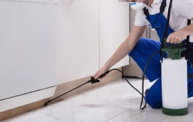 Affordable Pest Control Services In Beenleigh