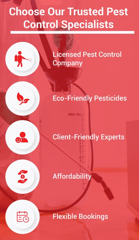 Choose Our Trusted Pest Control Specialists 1