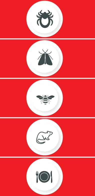 Pest Control Beenleigh